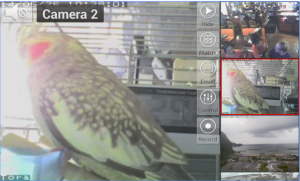 Viewer for ICam IP cameras for PC